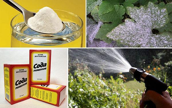 использование пищевой соды в саду и огороде