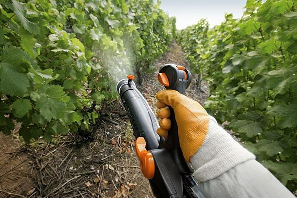 обработка винограда содовым раствором