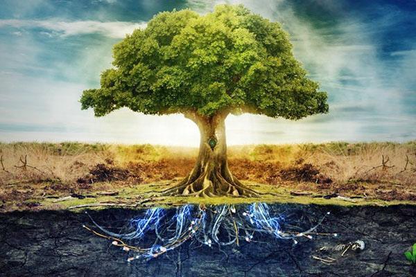 продолжительность жизни деревья от разных факторов