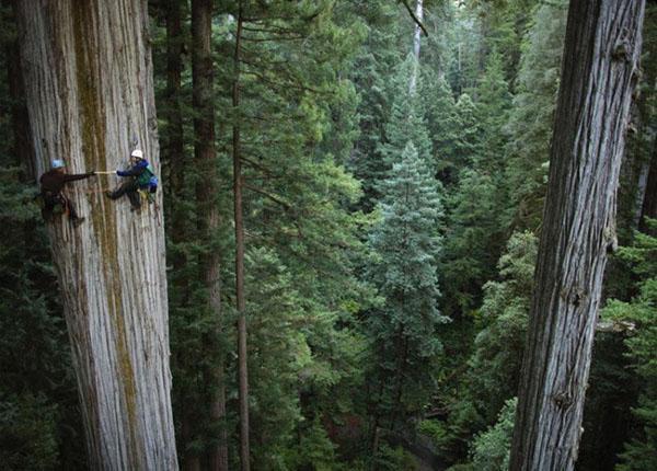 особенность леса секвойи