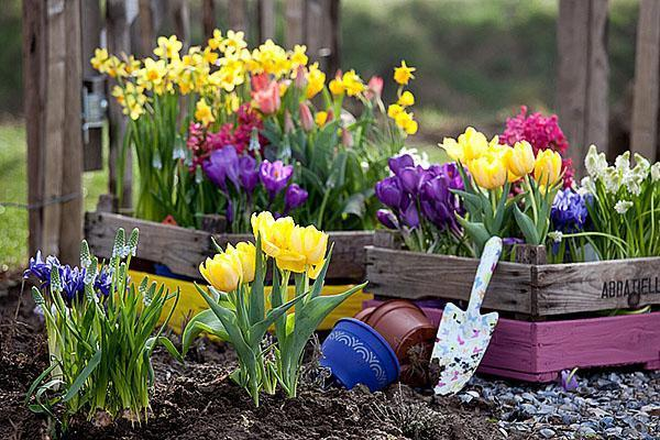 выращивание ранних цветов на даче