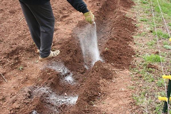 использование золы на огороде