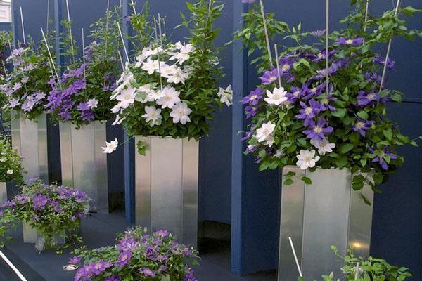 выращивание теплолюбивых сортов в переносных емкостях
