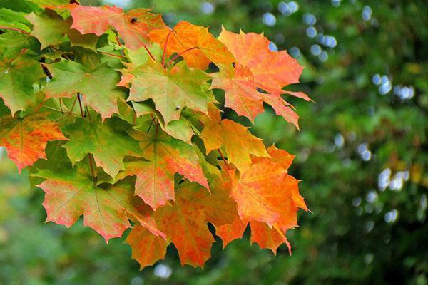 наступает осень