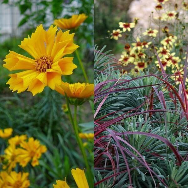 пышное цветение в саду
