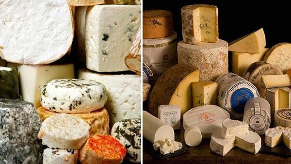 разновидность сыра