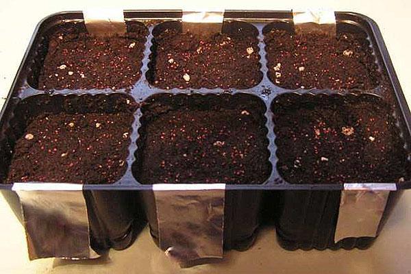 лотки для выращивания рассады