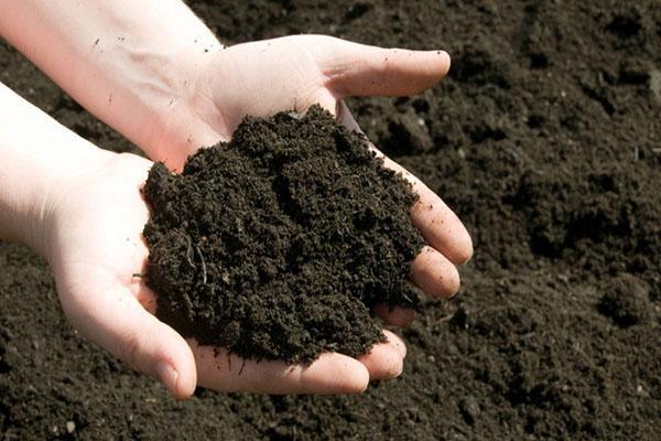 почва для ампельных цветов