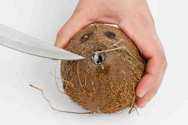 просверлить дырки в орехе