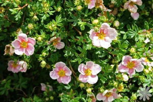 оригинальность цветения