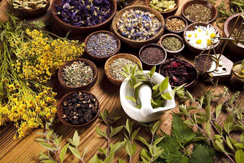 лекарственные растения в домашней аптечке