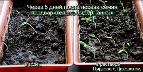 всходы семян