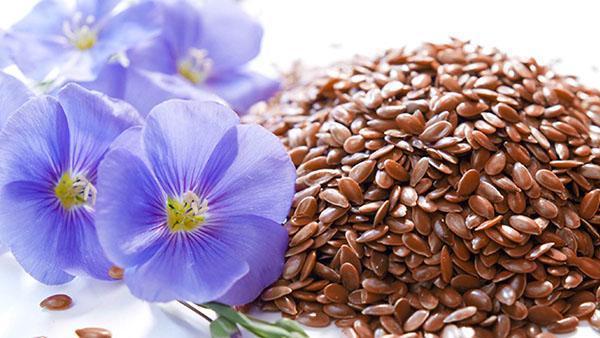 полезные семена льна