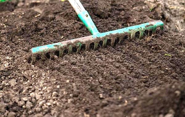 подготовка почвы к посадке земляники