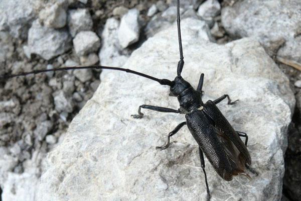 насекомое черной окраски