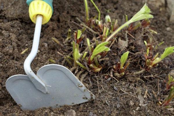 разрыхлить почву