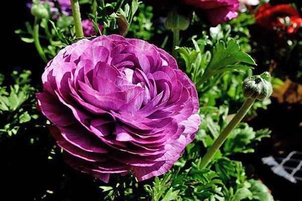 чудесный цветок для букета