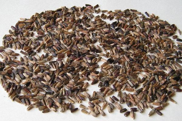 стратификация семян