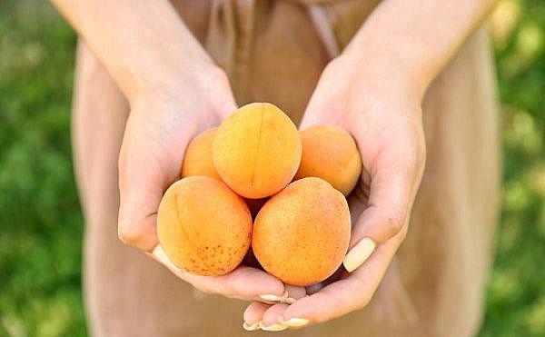 абрикос полезен не всем