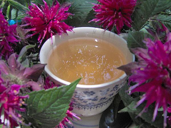 чай из монарды