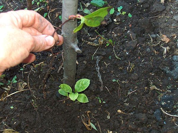 хорошая почва