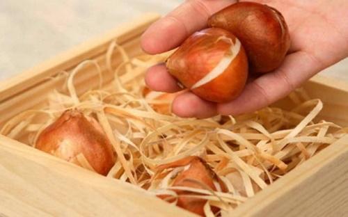 луковицы в опилках