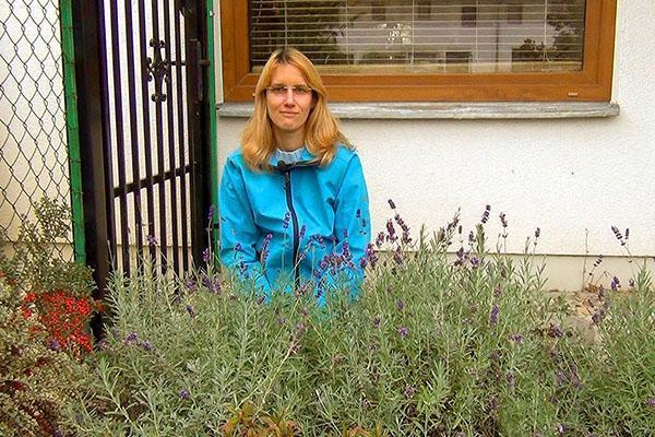 Как сохранить лаванду зимой в саду
