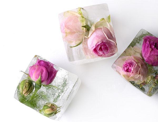 заморозить кубики розовой воды