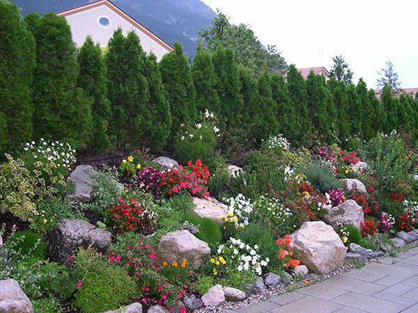 садовые композиции с эдельвейсом