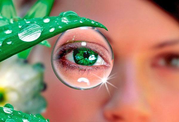 бузина для лечения зрения