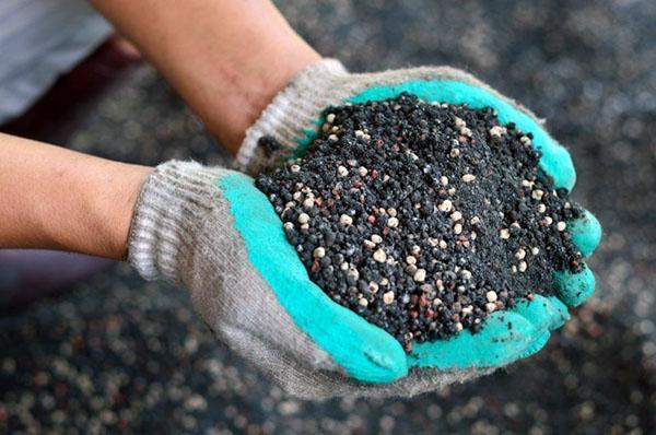 Можно ли выращивать амарант в домашних условиях?
