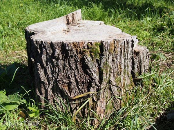 как уничтожить дерево не спиливая его