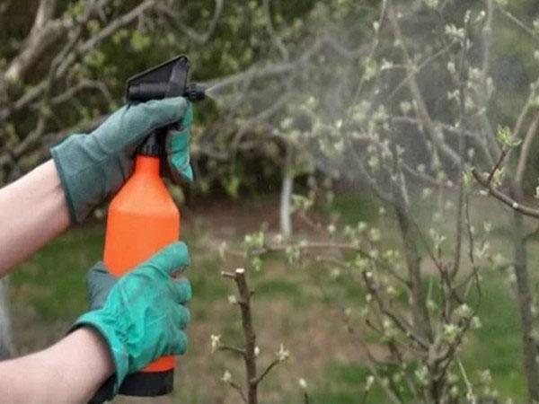 обработка листвы химикатами