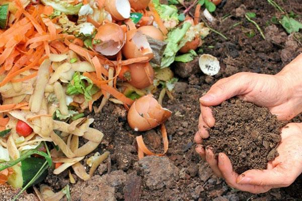 пищевые отходы для компоста