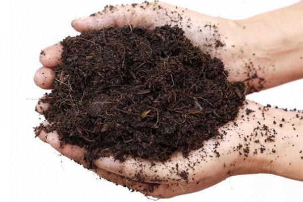 почва для посадки туи