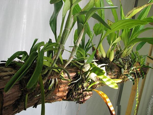 специальный блок для орхидеи