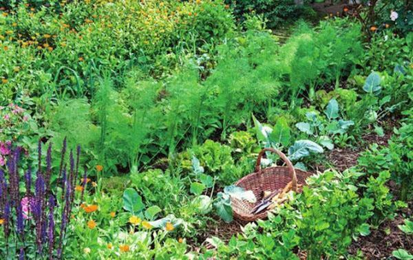 грядка с полезными травами