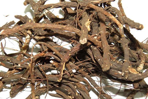 сухие корни лапчатки белой