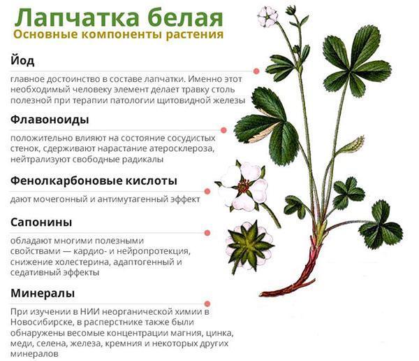 основные компоненты растения