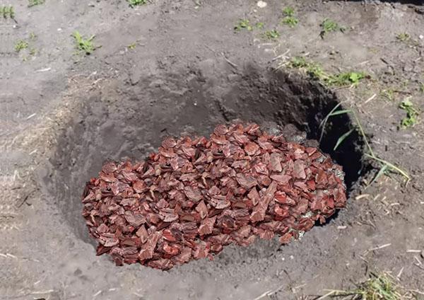 подготовка ямы для посадки дерена