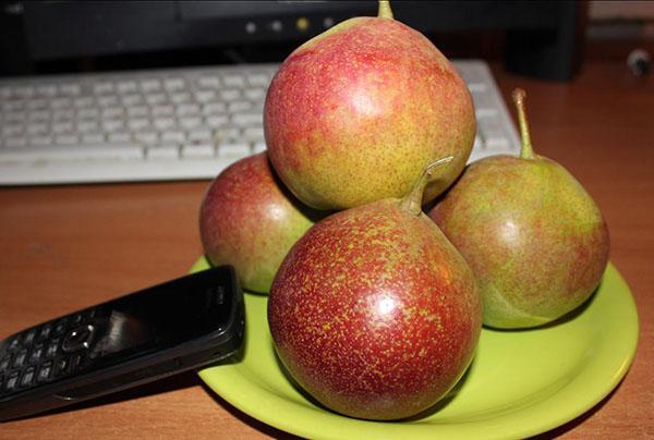 необычный окрас плодов груши