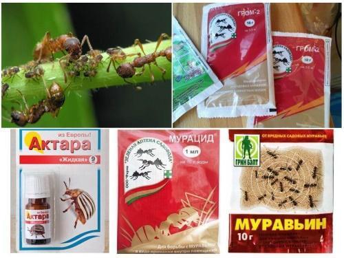 препараты против муравьев