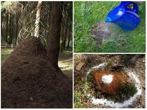 разрушение муравейника