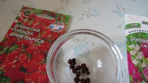 семена горошка
