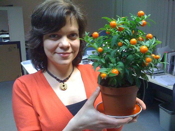 маленькое декоративное растение