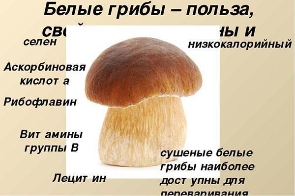 характеристики белого гриба