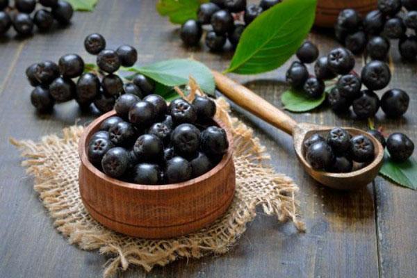 норма употребления черноплодной рябины