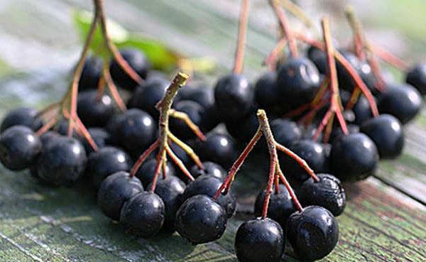 лечебные ягоды
