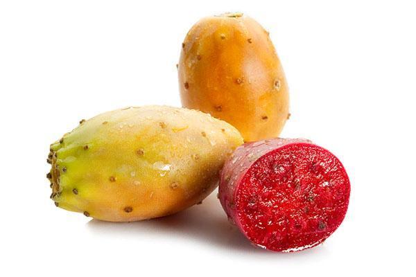плоды опунции обладают полезными свойствами
