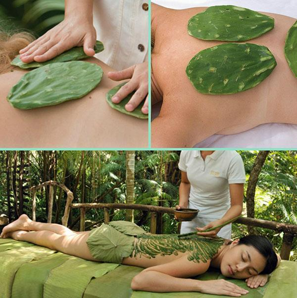 лечебный массаж с кактусом